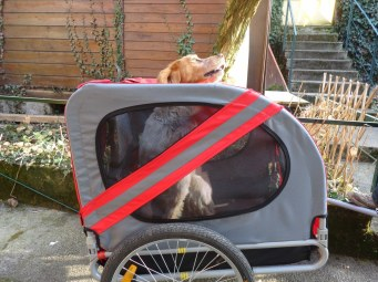 Via 4 Chemins - remorque velo chien