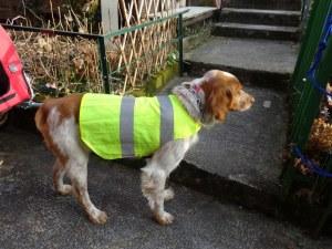 Via 4 Chemins - chien gilet securité
