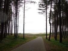 Entre forêt et dunes / between forest and dunes