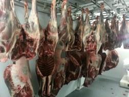 Les carcasses nous attendent