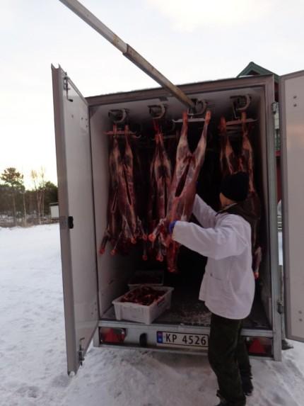 Déchargement des carcasses / unloading the carcasses