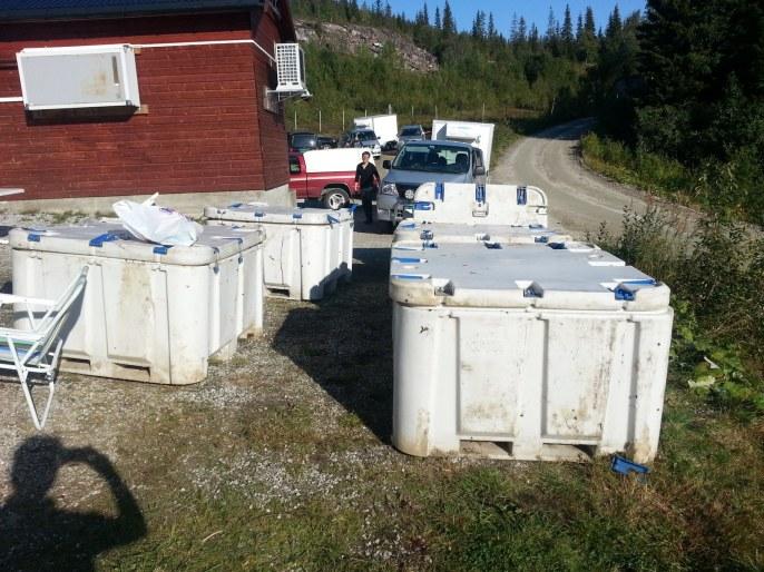 Containers rempli d'estomacs et autres viscères